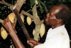 Farmers increase cocoa production